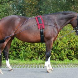 pessoa style lunging system